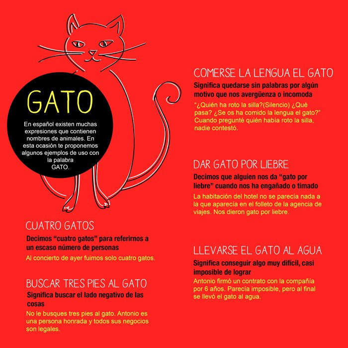 Spanish idioms with the word gato